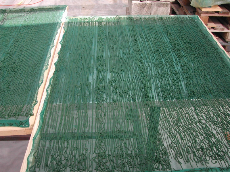 Spirulina spaghetti. That is the last operation before drying.