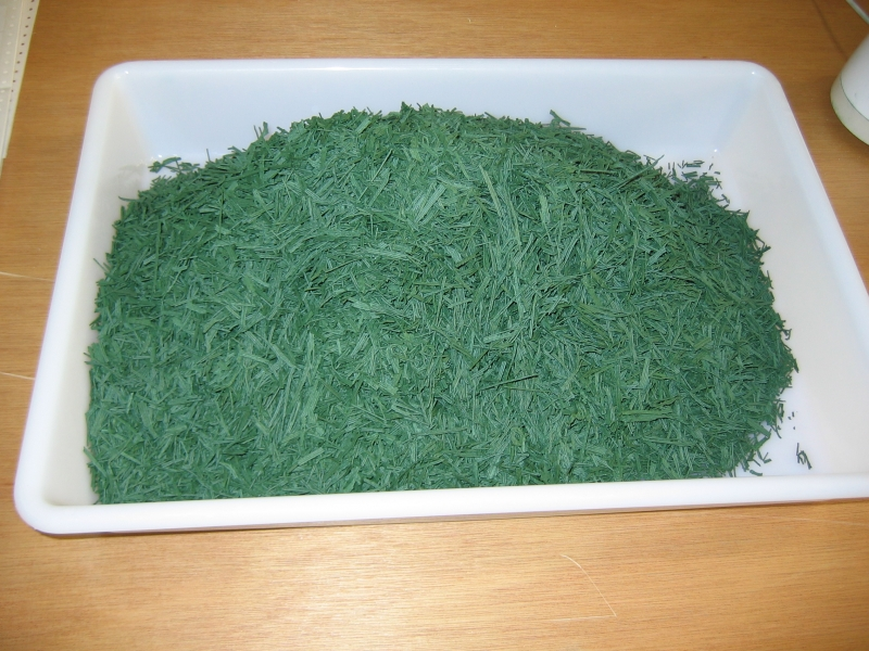 Spirulina after drying. A light grinding and the resulting flakes will be ready to be packed.