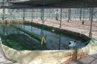 The Spirulina nursery in June 2007. A small reservoir, where spirulina reaches a specific concentration, is used to seed large reservoirs.